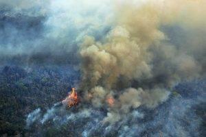 Basta à destruição da Amazônia